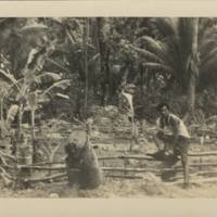 [0043 - Arno Atoll, Marshall Islands]