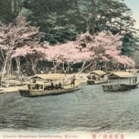 Cherry Blossoms Arashiyama, Kyoto
