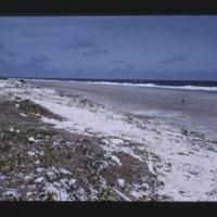 Eniwetok (Fred) Island - ocean side to ENE....