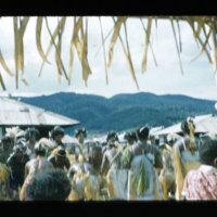 [Kaya Pulau, Jayapura, West Papua (Indonesia)?] [422]