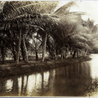 Canals lined with palm trees