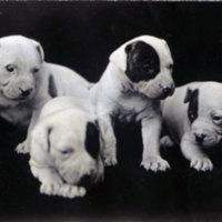 6 Puppies