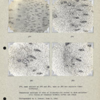 Physiology-Soils PM Negatives 077-082
