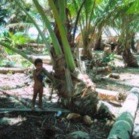 Child Under Tree on Beach