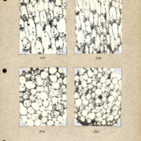 Physiology-Soils PM Negatives 137-140