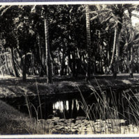 Pond lined by palm trees
