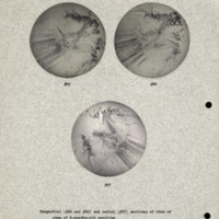 Physiology-Soils PM Negatives 025-027