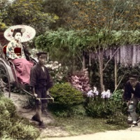 [Two women in kimono on  rickshaws in the wisteria…
