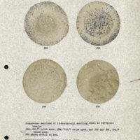 Physiology-Soils PM Negatives 033-036