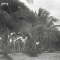 Looking South at Tumon Bay, Guam, M.I.. Oct. 1949.