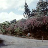 Flowering plants near a road