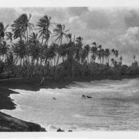 Black sand beach and palm trees