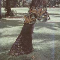 Plants on tree trunks