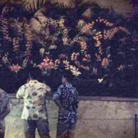Academy of Arts orchid exhibit. Honolulu. June 1951