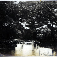 Stream with overhanging trees