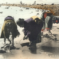 [Three women  in kimono clam digging]