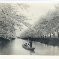 Cherry blossoms along a canal with a traditional boat,…