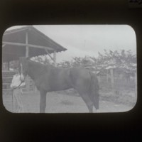 Horse and people: [馬と人物]