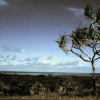 Tree and Ocean Horizon
