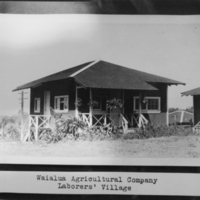 Waialua Agricultural Company Laborers' Village