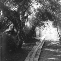 872. [Stone pathway]