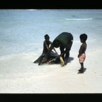 "Turtle. Kein attaching ""rope"" made from green coconut…"