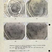Physiology-Soils PM Negatives 091-094
