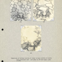 Physiology-Soils PM Negatives 072-074