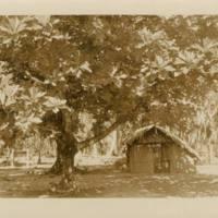 [0143 - Arno Atoll, Marshall Islands]