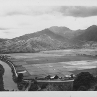 Hanalei River and Rice Fields