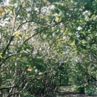 Tropical vegetation, delightful road. Anguar, [Ngeaur,…