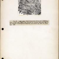 Page 19 – Leaf gaps