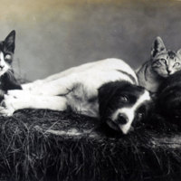 2 Cats and Two Dogs