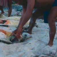 Burying Two Dead Turtles
