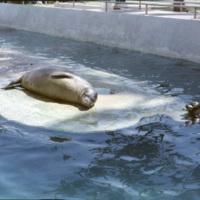 Seals at the Waikiki aquarium