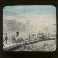 Transportation of lumber by Italian workers: イタリー人材木運搬