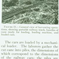 [099] Harvesting Sugar Cane