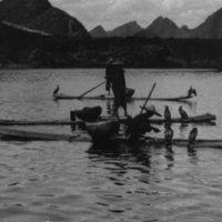 746. Cormorant fishing : Kweilin