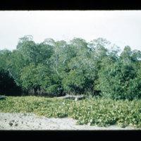 [Jayapura, West Papua (Indonesia)?] [370]