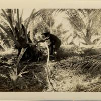 [0104 - Arno Atoll, Marshall Islands]