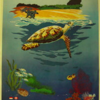 Selamatkan Penyu Laut Indonesia