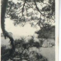 Kaizawa 2-068: View of Matsushima Bay 松島湾 through pine…