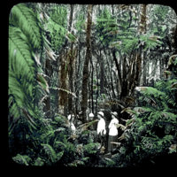 Four people standing under tall tree ferns in a forest