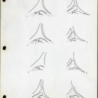 Page 37 – Stem apex and leaf primordia