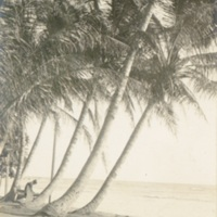 [Palm trees along the beach]