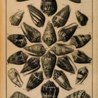 La Conchyliologie, ou, Histoire Naturelle des Coquilles…