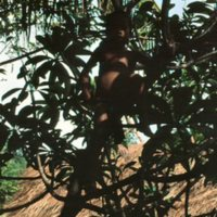 Young Boy in a Tree - 2