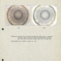 Physiology-Soils PM Negatives 099-100
