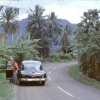 Road through banana and palm trees
