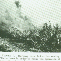 [097] Burning Sugar Cane